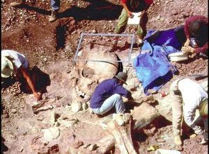 考古學家在南美洲的智利挖到的巨人骨骸